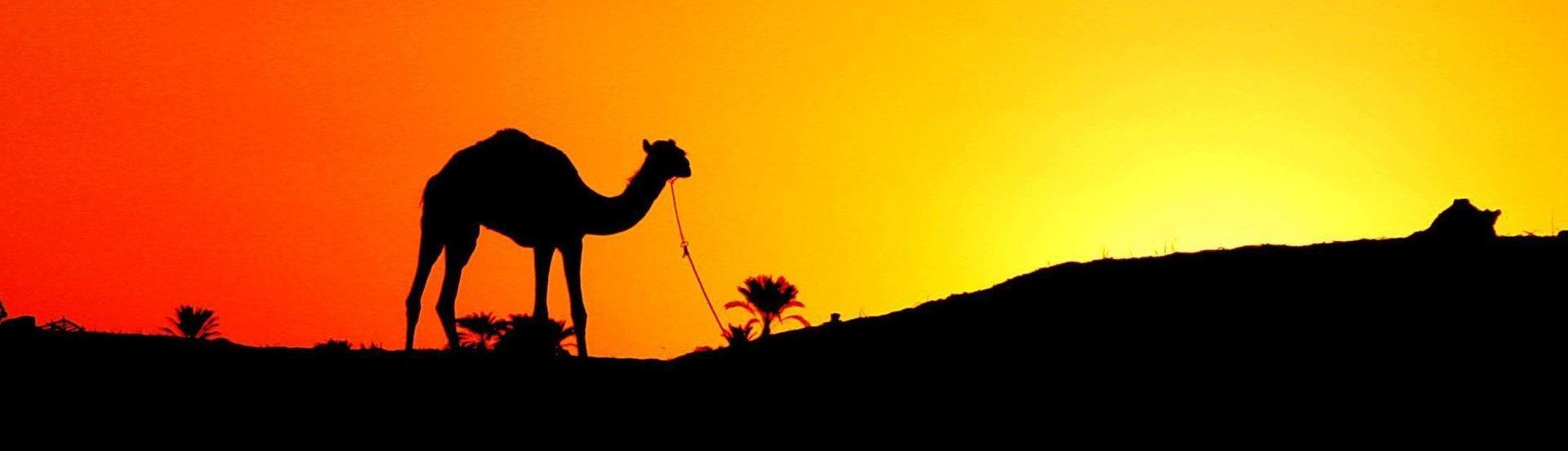 Тур в египет лучшая цена в москве